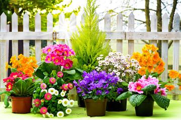 Blühende Frühlingspflanzen