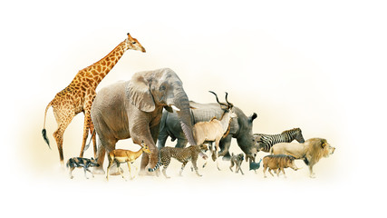 Wall Mural - Safari Animals Walking Side Horizontal Banner