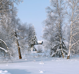 Lonely house behind of bare hoary trees in winter