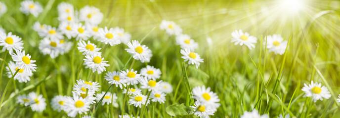 Papiers peints Pistache Bunte Blumenwiese im Frühling und Sonnenstrahlen