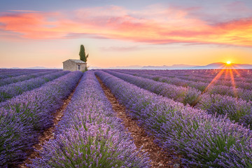 Sunrise in Valensole Wall mural