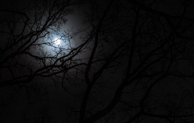 full moon as the night scenery, among branches in the moonlight