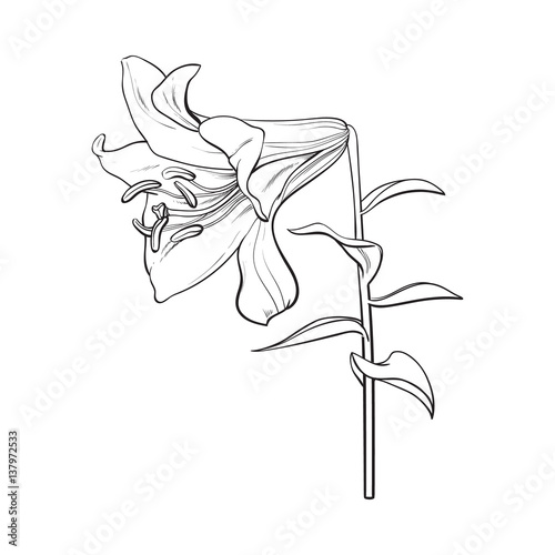 single flower with stem sketch wwwimgkidcom the