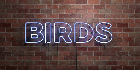 BIRDS - fluorescent Neon tube Sign on brickwork - Front view - 3D rendered royalty free stock picture. Can be used for online banner ads and direct mailers..