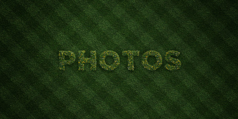PHOTOS - fresh Grass letters with flowers and dandelions - 3D rendered royalty free stock image. Can be used for online banner ads and direct mailers..