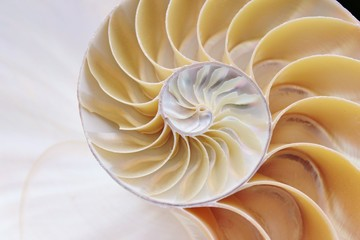 nautilus shell section background symmetry Fibonacci half cross section spiral pearl golden ratio structure growth close up back lit mother of pearl close up copy space