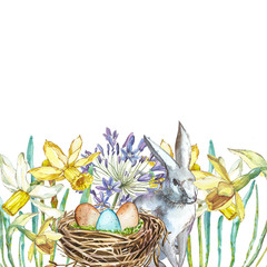 Spring flowers narcissus with nest, rabbit . Isolated on white background. Watercolor hand drawn illustration. Easter design.