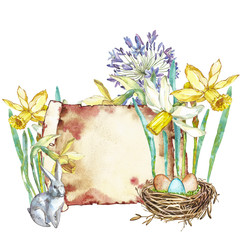 Spring flowers narcissus with nest. Isolated on white background. Watercolor hand drawn illustration. Easter design.