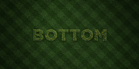 BOTTOM - fresh Grass letters with flowers and dandelions - 3D rendered royalty free stock image. Can be used for online banner ads and direct mailers..