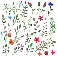 Set of floral elements. Watercolor branches. Green leaves and red flowers on a white background. A collection of hand-drawn Botanical elements.