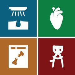 Set of 4 anatomy filled icons