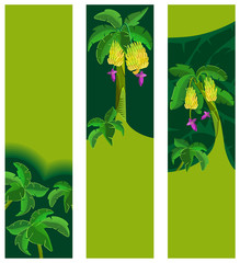 Banana and palm  tree. Wide skyscraper. Collection of tropical banners. Isolated on white background.  Vector illustration.