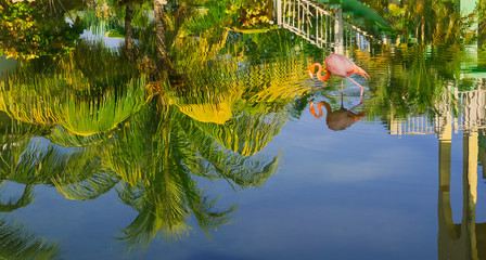 Nice amazing beautiful view of tropical garden reflected in water upside down with pink flamingo bird walking in water