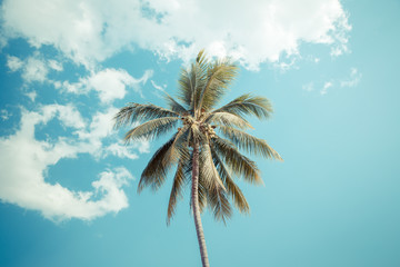coconut tree under cloud and blue sky
