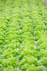 close up fresh green salad