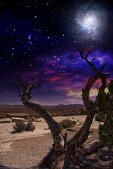Desert Tree  Some elements provided courtesy of NASA