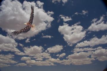 Fototapete - Eagle