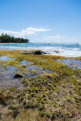 Tropical Seashore. Island and waves