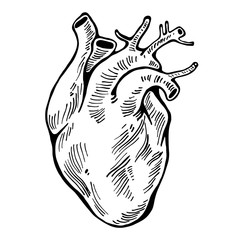 Human heart black line, tattoo. Vector illustration.