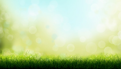 Blades of Green Grass with a blurred bokeh sky blue and green garden foliage background.