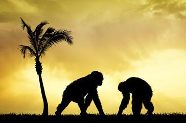 Chimpanzees at sunset