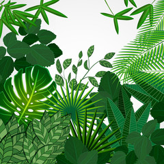 Frame made of leaves on a white background. Jungle tropical floral border.