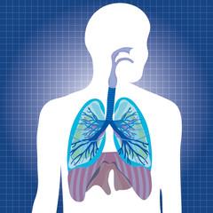 Human system respiratory vector illustration