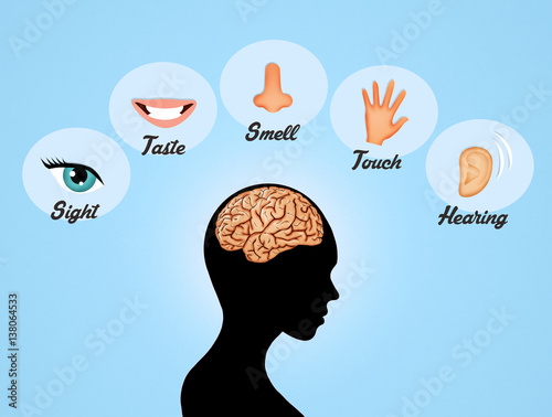 an overview of the five senses in humans The five senses are mentioned often in shakespeare's works, and later were the subject of many allegorical artworks today i discovered is a daily dose of facts for lifehacker readers - the weird.