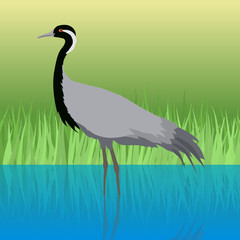 Demoiselle Crane Flat Design Vector Illustration