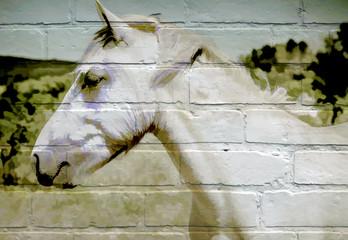 Art urbain, cheval