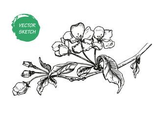 Appleflower Sketch 1
