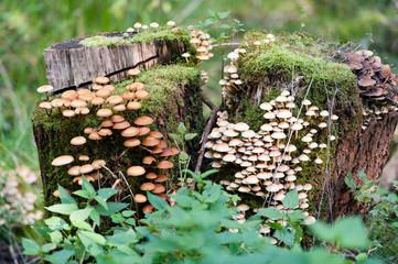 Pilzkolonie im Herbst