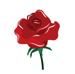 Vector of red rose