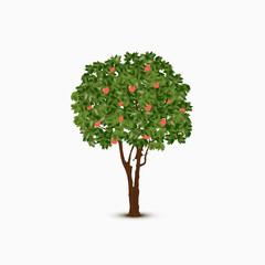 Vector apple tree illustration on white background