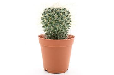 A Cactus.