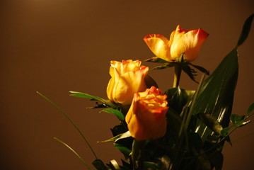 Fototapeta Żółte róże obraz