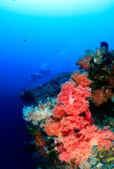 Distant SCUBA divers swim over a deep, colorful coral wall