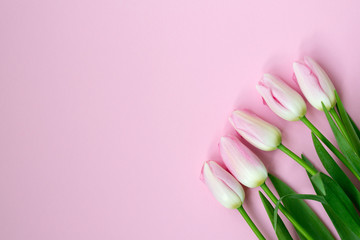 Pink tulips on the pink background. Flat lay, top view. Valentines background