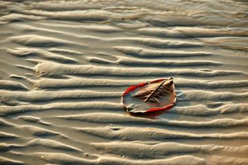 Brown leaf on the white sandy tropical beach, Koh Chang, Thailand