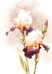 Watercolor Irises Flowers Floral Background Texture Hand Painted Illustration