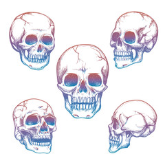 Colorful skull collection. Vector sketch of skull isolated on white