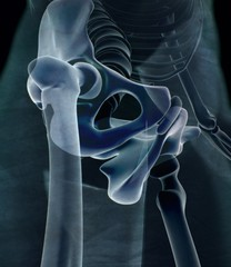 Ilium bone, hip bone or pelvis. Human anatomy, bone skeletal strucure xray. 3D illustration.