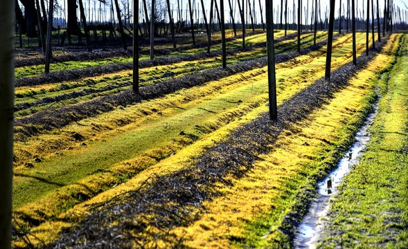 Field of hops waiting for spring.