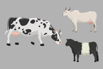 Bull and cow farm animal vector illustration.