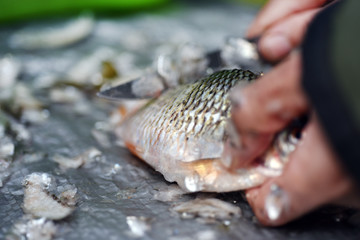 Firsherman clean freshly caught fish, cleaning scales