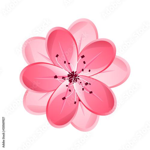 Isolated Flower Of Sakura Cartoon Pink And White Blossom Of