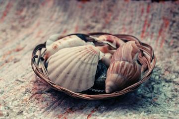 Seashell detail