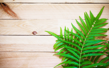 Fresh fern on wooden background, Top view with copy space