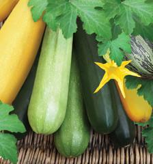 Set of multi coloured zucchini