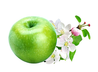 Green fresh apple with leaves and flowers isolated on white